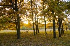 De herfstbomen in het park Royalty-vrije Stock Foto's