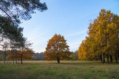 De herfstbomen in het park Stock Foto's