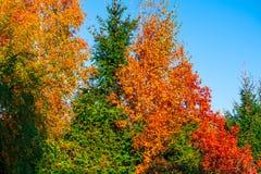 De herfstbomen in het park stock foto