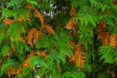 De herfstbomen in het park stock afbeelding