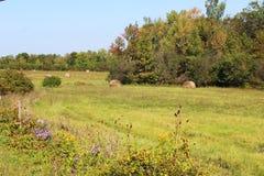 De herfstbomen, hooibalen en asters Royalty-vrije Stock Fotografie