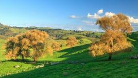 De herfstbomen in de landbouw van landschap stock afbeelding