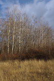 De herfstbomen in Mavrovo stock afbeeldingen