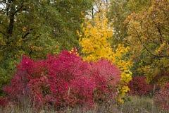 De herfstbomen met bladeren van heldere kleuren groene rode geel Stock Fotografie