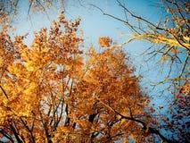 De herfstbomen met blauwe hemel royalty-vrije stock fotografie