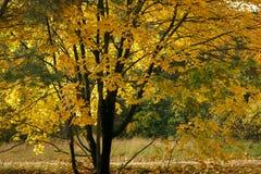 De herfstbomen met gele bladeren in het bos op de weg door het de herfstbos royalty-vrije stock foto