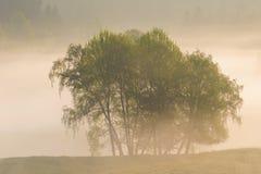De herfstbomen met mist royalty-vrije stock afbeeldingen