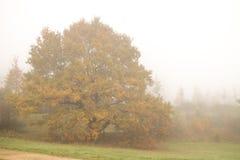 De herfstbomen in mist Royalty-vrije Stock Afbeeldingen