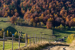 De herfstbomen op bergheuvels Royalty-vrije Stock Foto's