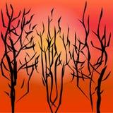 De herfstbomen op de hete zon als achtergrond Stock Afbeeldingen