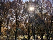 De herfstbomen op een zonnige dag royalty-vrije stock foto's