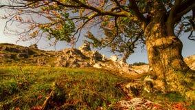 De herfstbomen op rotsen stock footage