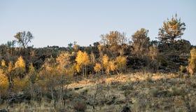 De herfstbomen in Oregon Stock Foto's