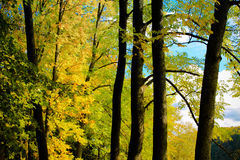 De herfstbomen in park Royalty-vrije Stock Afbeelding
