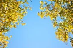 De herfstbomen Takken met groene en gele die bladeren door de zon worden verlicht Tegen de achtergrond van de blauwe hemel Royalty-vrije Stock Afbeeldingen