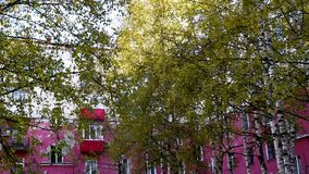 De herfstbomen tegen de hemel en high-rise gebouwen stock footage