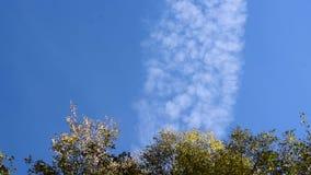 De herfstbomen tegen de hemel en high-rise gebouwen stock videobeelden