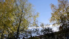 De herfstbomen tegen de hemel en high-rise gebouwen stock video