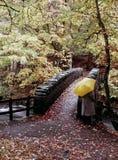 De herfstbomen van de rivier Stock Foto's