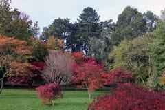 De herfstbomen van het Roathpark in Cardiff royalty-vrije stock foto's