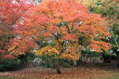 De herfstbomen van het Roathpark in Cardiff stock afbeeldingen