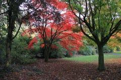 De herfstbomen van het Roathpark in Cardiff royalty-vrije stock fotografie