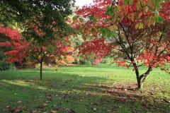 De herfstbomen van het Roathpark in Cardiff royalty-vrije stock afbeelding