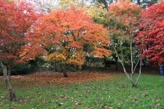 De herfstbomen van het Roathpark in Cardiff stock foto's