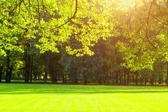 De herfstbomen in zonnig de herfstpark dat door zonneschijn wordt aangestoken - de herfstlandschap Royalty-vrije Stock Fotografie