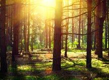 De herfstbomen in zonstralen Stock Afbeelding