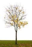 De herfstboom Stock Afbeelding