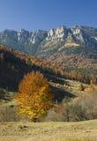 De herfstboom Stock Fotografie