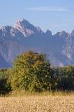 De herfstboom Stock Afbeeldingen