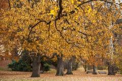 De herfstboom Stock Foto's