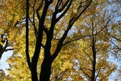 De de herfstboom bedekt 06 stock afbeeldingen