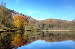 De herfstboom in Grasmere wordt weerspiegeld die Stock Foto