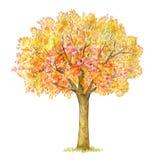 De herfstboom handdrawing geïsoleerd op wit Royalty-vrije Stock Foto's