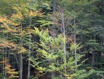 De herfstboom in het bos royalty-vrije stock fotografie
