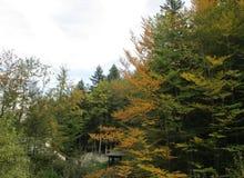 De herfstboom in het bos stock afbeelding