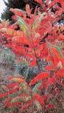 De herfstboom in het bos dichtbij de stad van Rumia stock foto
