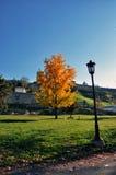 De herfstboom in het stadspark Stock Fotografie