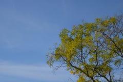 De herfstboom met een hemelachtergrond Stock Fotografie