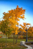 De herfstboom met gele bladeren in het park Stock Foto's