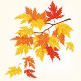 De herfstboom met mooie vliegende bladeren De kaart van de herfst Met extra formaat Vector illustratie Stock Foto