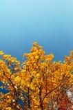 De herfstboom op blauwe hemel 4 Stock Foto