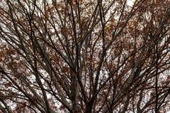 De herfstboom op de achtergrond van hemel Stock Foto
