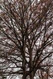 De herfstboom op de achtergrond van hemel Royalty-vrije Stock Afbeelding