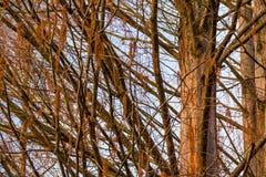 De herfstboom op de achtergrond van hemel Stock Foto's