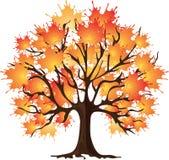 De herfstboom van de kunst. Esdoorn. Vector illustratie. Stock Foto's