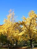 De herfstboom van het Central Park Stock Afbeeldingen